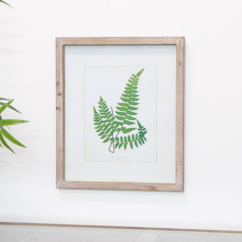 Framed Fern Wall Picture