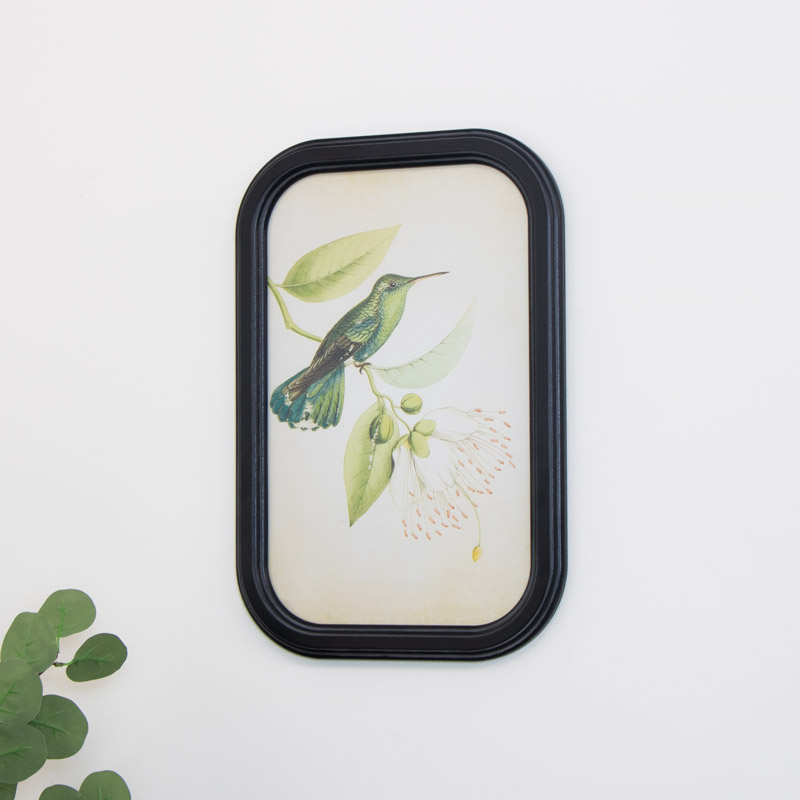 Framed Hummingbird Picture