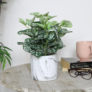 Faux Nerve Plant in Pot